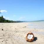Kokos nad morzem