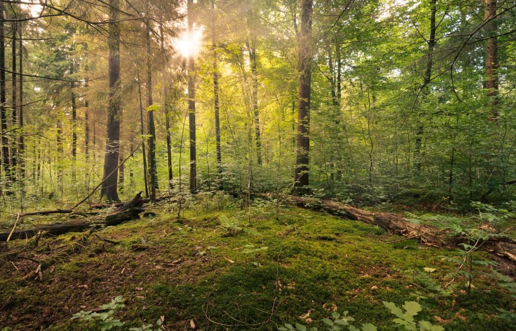 Fairytale Forest - Sinburst