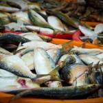 rybny market