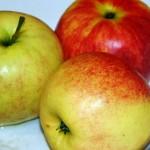 żebrrka z jabłkami (3)