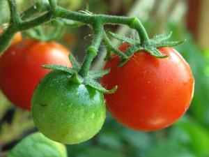 Green/Red Cherry Tomato