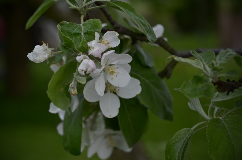 Arboretum_Strzelin-11