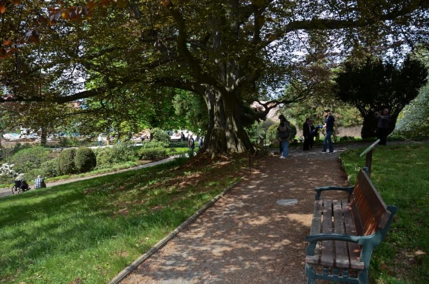 Arboretum_Strzelin-4
