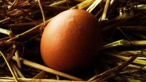 egg-19981_640