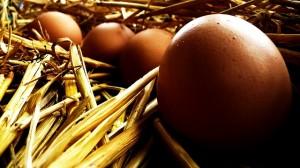 egg-19995_640