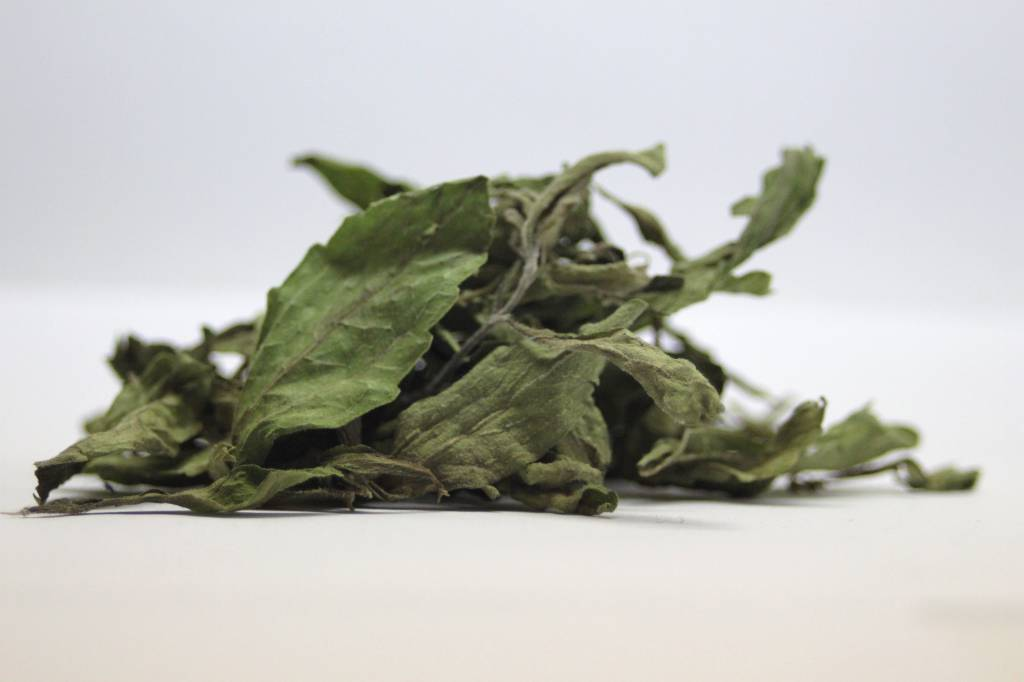 Stevia_rebaudiana_leaves_dry