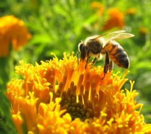 Bee_126