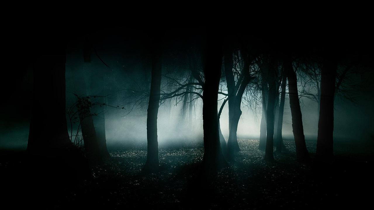 forest-dark-fog-dark-forest-wallpaper