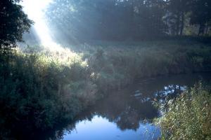 Białowieski Park Narodowy 17