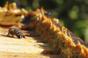 pszczoły w ulu 3
