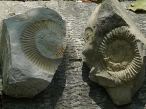 fossils-384821_640