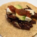 Taco z owadami