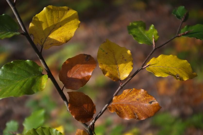 Jesień w Karkonoszach-5035