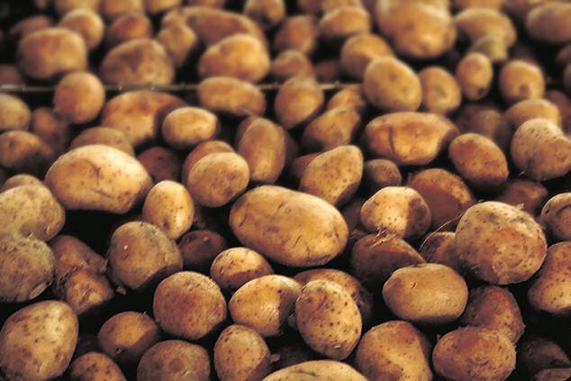 kwarantanna obejmuje polskie ziemniaki