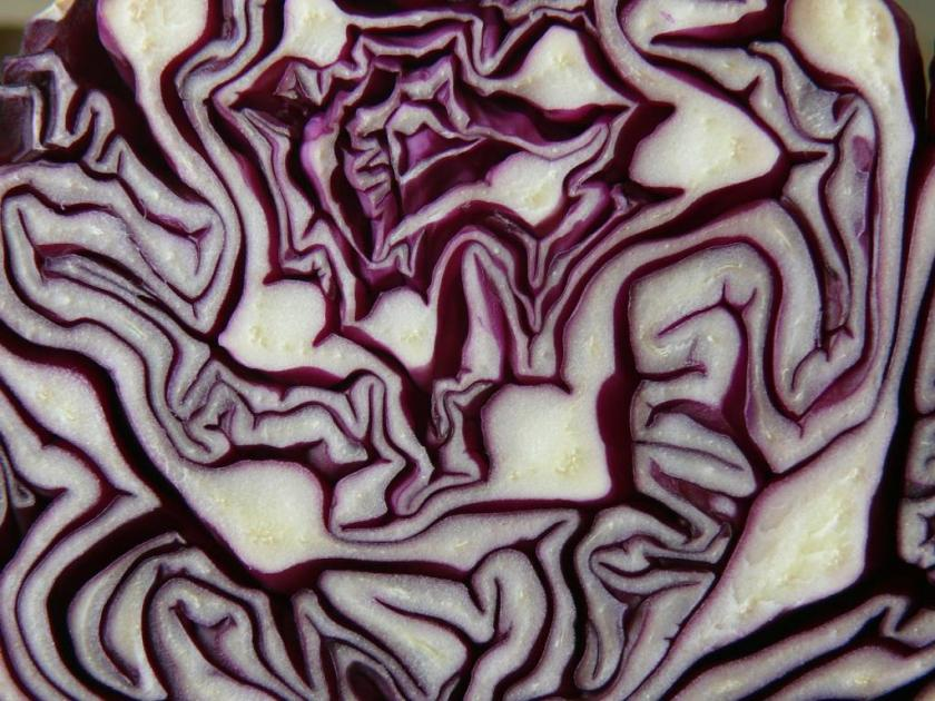 red-cabbage-293349_1280