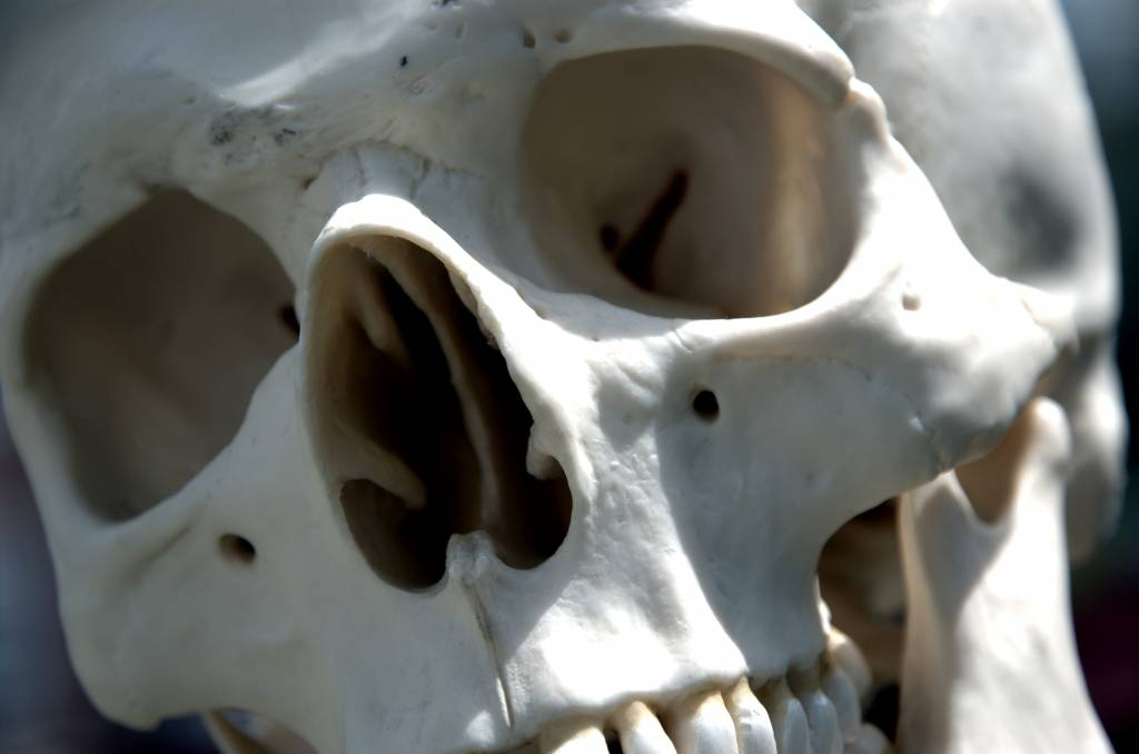 Human_skull_-_close_up