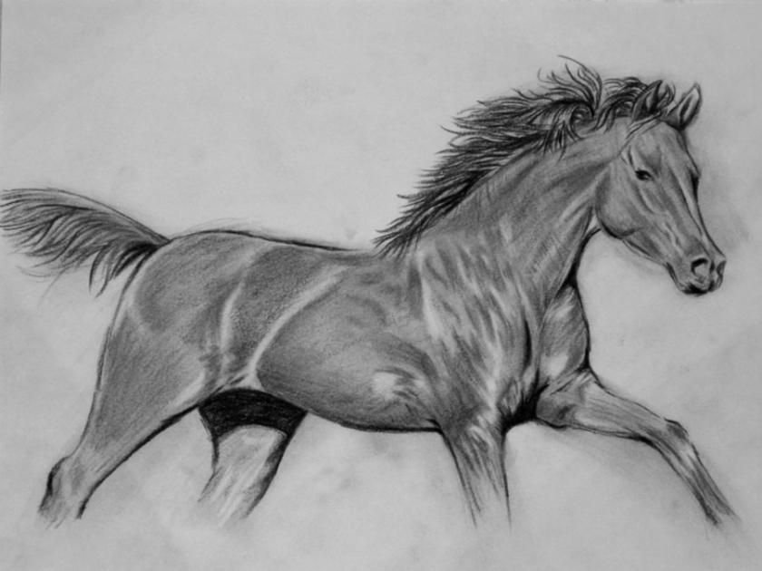 hand_drawing_horse_by_natasha555-d3e2k57