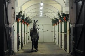 koń w stajni chobienice