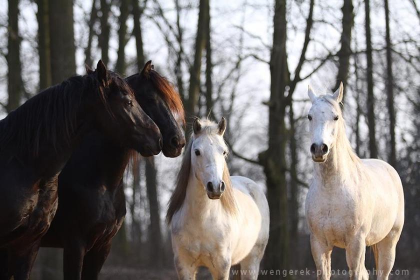konie ze stajni chobienice