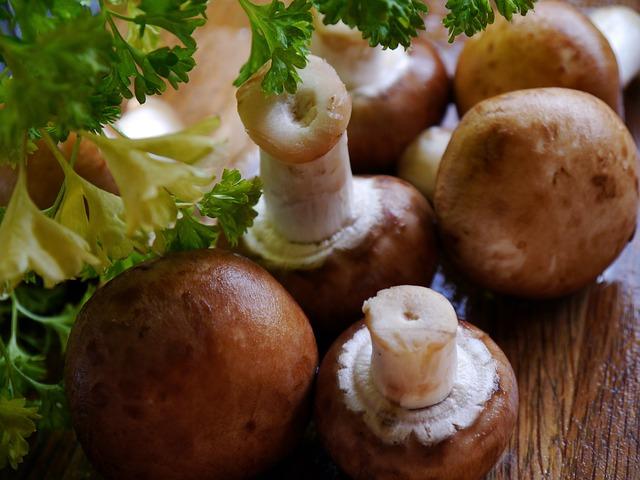 mushroom-498631_640