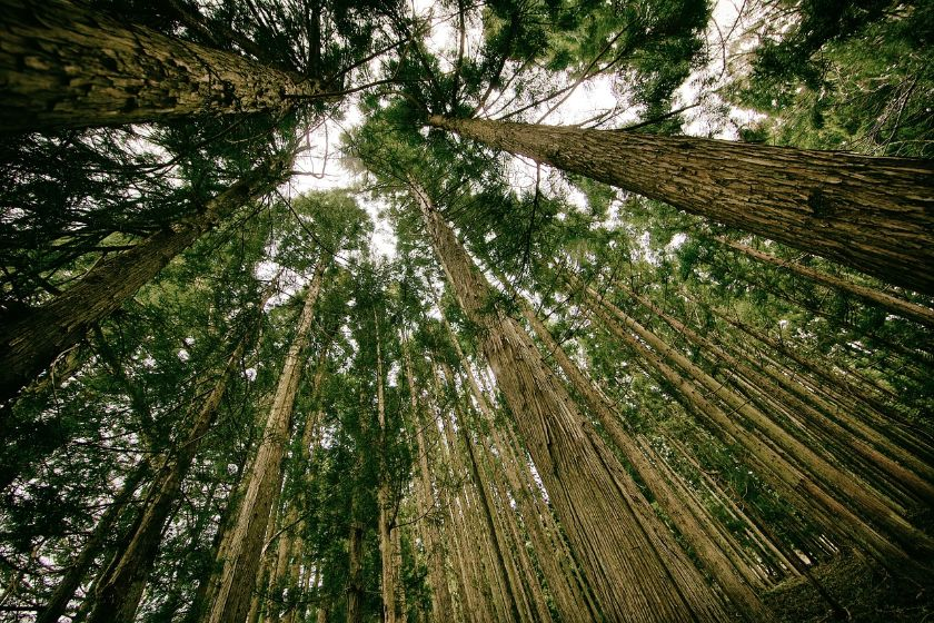 historia lasów i polowań w Polsce