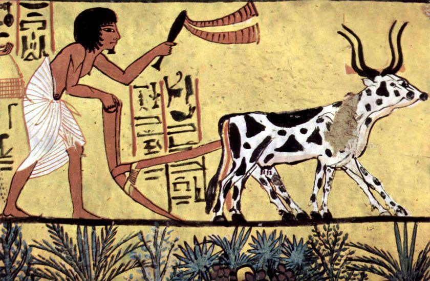 początki rolnictwa