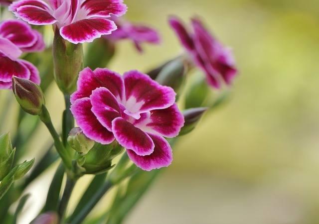kwiaty, źródło: pixabey.com