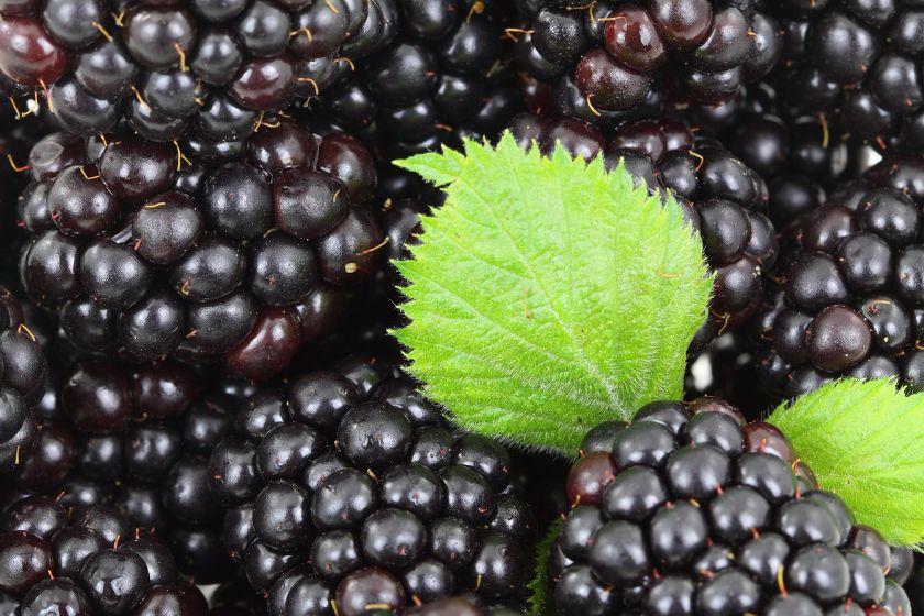 konfitura z morwy czarne, źródło: pixabay.com
